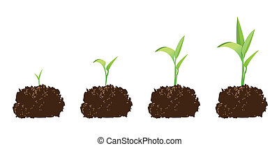 seedling or germination of a seed, to illustrate concept of...