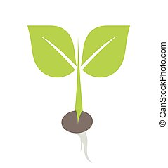 Seedling plant - Little plant growing from seed illustration