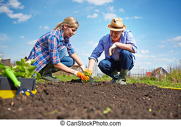 Image of couple of farmers seedling sprouts in the garden