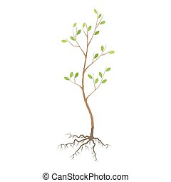 Seedling tree flat icon - Seedling tree with roots, colorful...