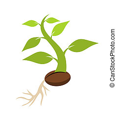Seedling - New born plant growing from seed. Vector...