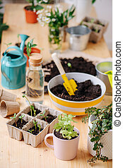 Seedlings and gardening tools on the table.