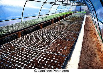 seedlings, arqueado, estufa