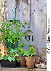 seedlings, e, ferramentas ajardinando