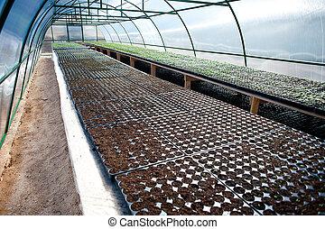 seedlings, estufa, arqueado