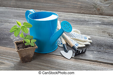 Seedlings in a peat pot and blue watering can - Concept of ...