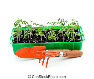 Seedlings in germination tray with gardening tools