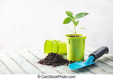 Seedlings in green plastic pots
