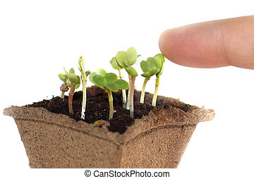 Seedlings in the earth, fingers touching the young shoot of the plant