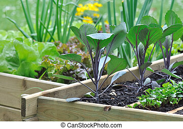 seedlings in vegetable patch - seedlings of various...