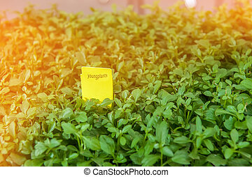 Seedlings of flowers and vegetables growing in foam containers in paper bags on the window in the ground on a Sunny day. Modern tendencies of cultivation of seedling for a city garden.