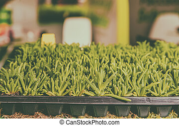 Seedlings of flowers and vegetables growing in foam containers in paper bags on the window in the ground on a Sunny day. Modern tendencies of cultivation of seedling for a city garden. Toned.