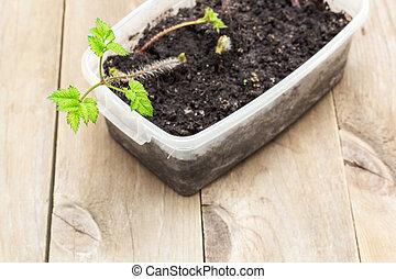 seedlings of flowers in a pot