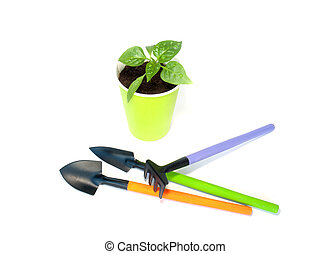 Seedlings of pepper with garden tools
