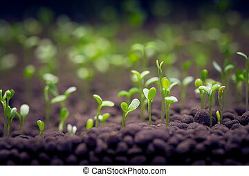 Seedlings of water plants