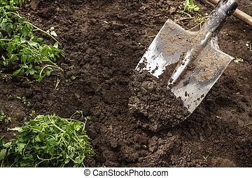 seedlings, pá, chão, escava