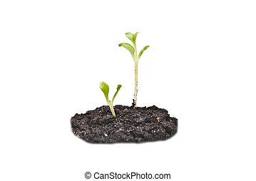 seedlings, twee