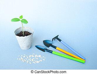seedlings, van, komkommer, in, turf, potten, met, tuinieren gereedschap