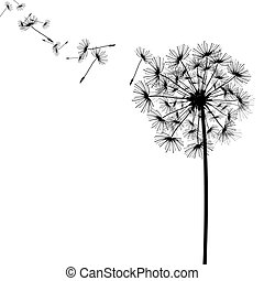 seeds, ветер, одуванчик