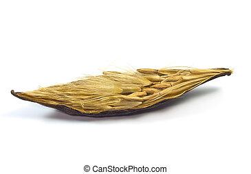 seeds., adenium