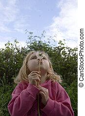 seeds, blowing, молодой, женский пол, одуванчик