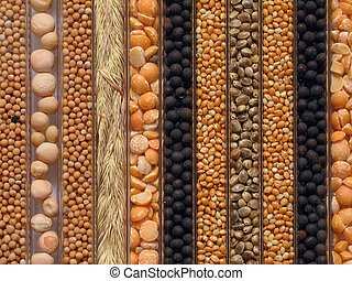 Seeds - Closeup of a tray