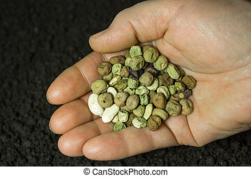 Seeds in hand on the background of the soil