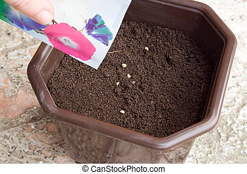 seeds in pot