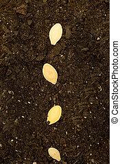Seeds In Soil Vertical