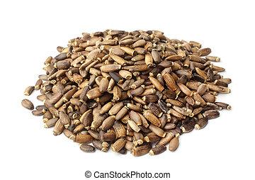 Seeds of a milk thistle (Silybum marianum, Scotch Thistle, Marian thistle)