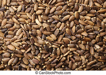 Seeds of a milk thistle (Silybum marianum, Scotch Thistle, Marian thistle), for backgrounds or textures