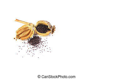 Seeds of a poppy