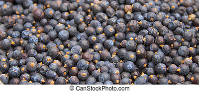seeds of juniper
