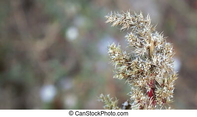 Seeds of weeds - Growing seeds in field of weeds