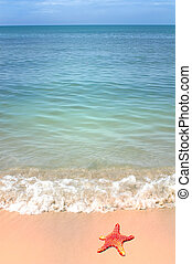 seestern, und, ozean- welle, auf, sandig, tropischer strand