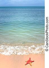 seestern, wasserlandschaft, tropische , welle, sandstrand,...