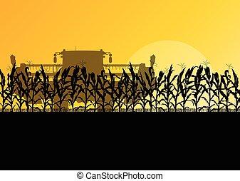 segador, maíz, amarillo, otoño, campo, vector, combinar,...