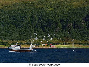 Segulls are chasing a small fisherboat in a norwegian fjord.