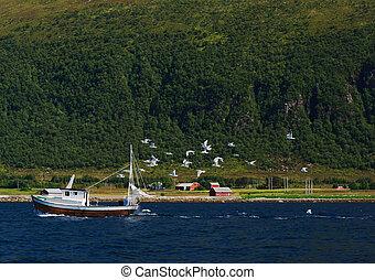 segulls, zijn, achtervolgen, een, kleine, fisherboat, in, een, noor, fjord.