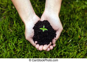 segurando, close-up, planta, jovem, broto, médico, marijuana, experiência verde, capim, cannabis, palmas, mãos