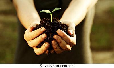 segurando, planta, jovem, mão feminina