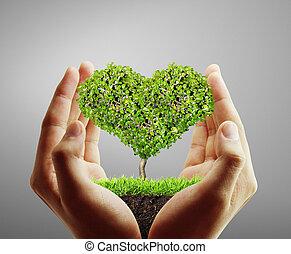 segurando, um, árvore