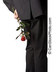 segurando, um, rosa vermelha