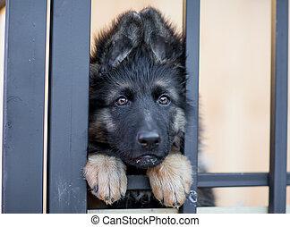 sehr, unterstand, junger hund, käfig, traurige