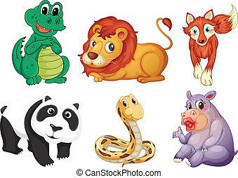 sei, differente, generi, di, animali