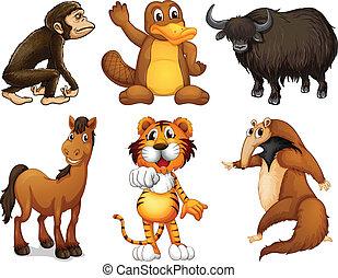 sei, differente, generi, di, quattro-con gambe, animali