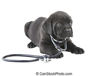 seine, hals, freigestellt, stethoskop, weißes, doggy