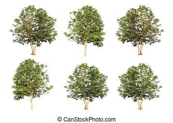 seis, árboles, colección, aislado, blanco, plano de fondo, con, ruta de recorte
