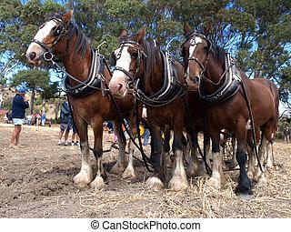 seis, cavalo, equipe