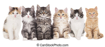 seis, cute, gatinho, lado lado